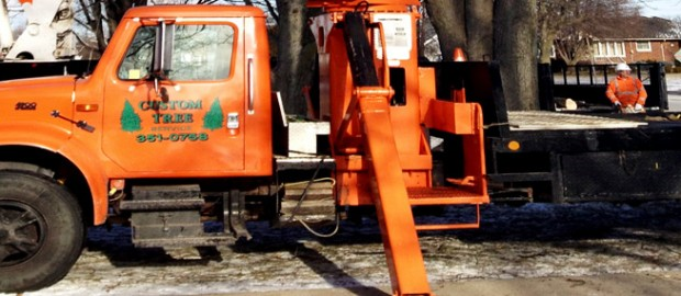 Chatham-Kent Tree Removal Services